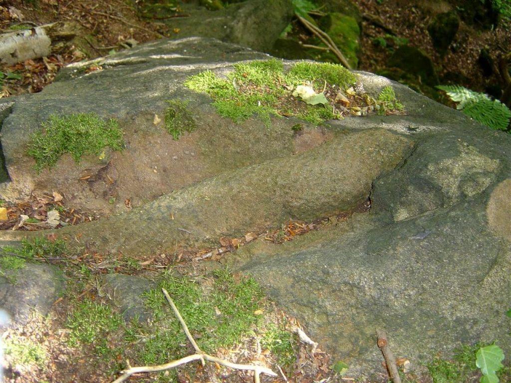 fossil stigmaria pool in wharfedale